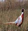 Prairie Seed Farms Pheasant Food Plot Seed